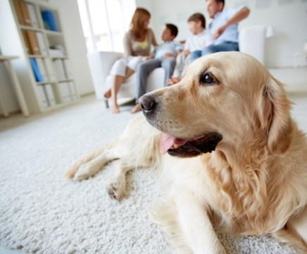 How to Keep Your House Clean when You Have a Pet Picture
