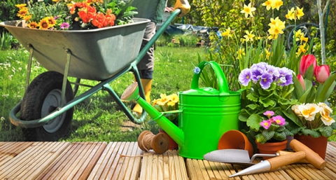 Top Supplies You Need for Gardening