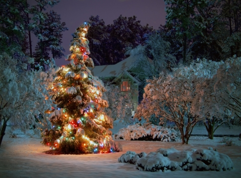 Decorate Your Garden Christmas style Picture