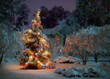 Decorate Your Garden Christmas style!