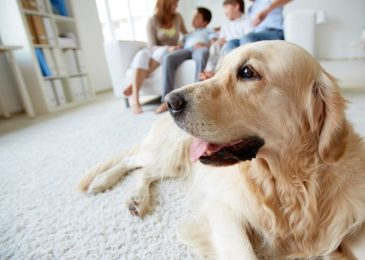 How to Keep Your House Clean when You Have a Pet