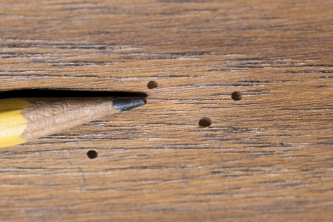 4 Wood-Eating Insects That Can Damage Your Home
