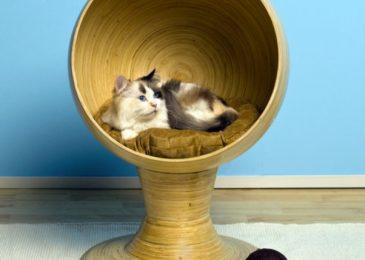 Stylish Cat Furniture Pieces that Look like Designer Decor Elements